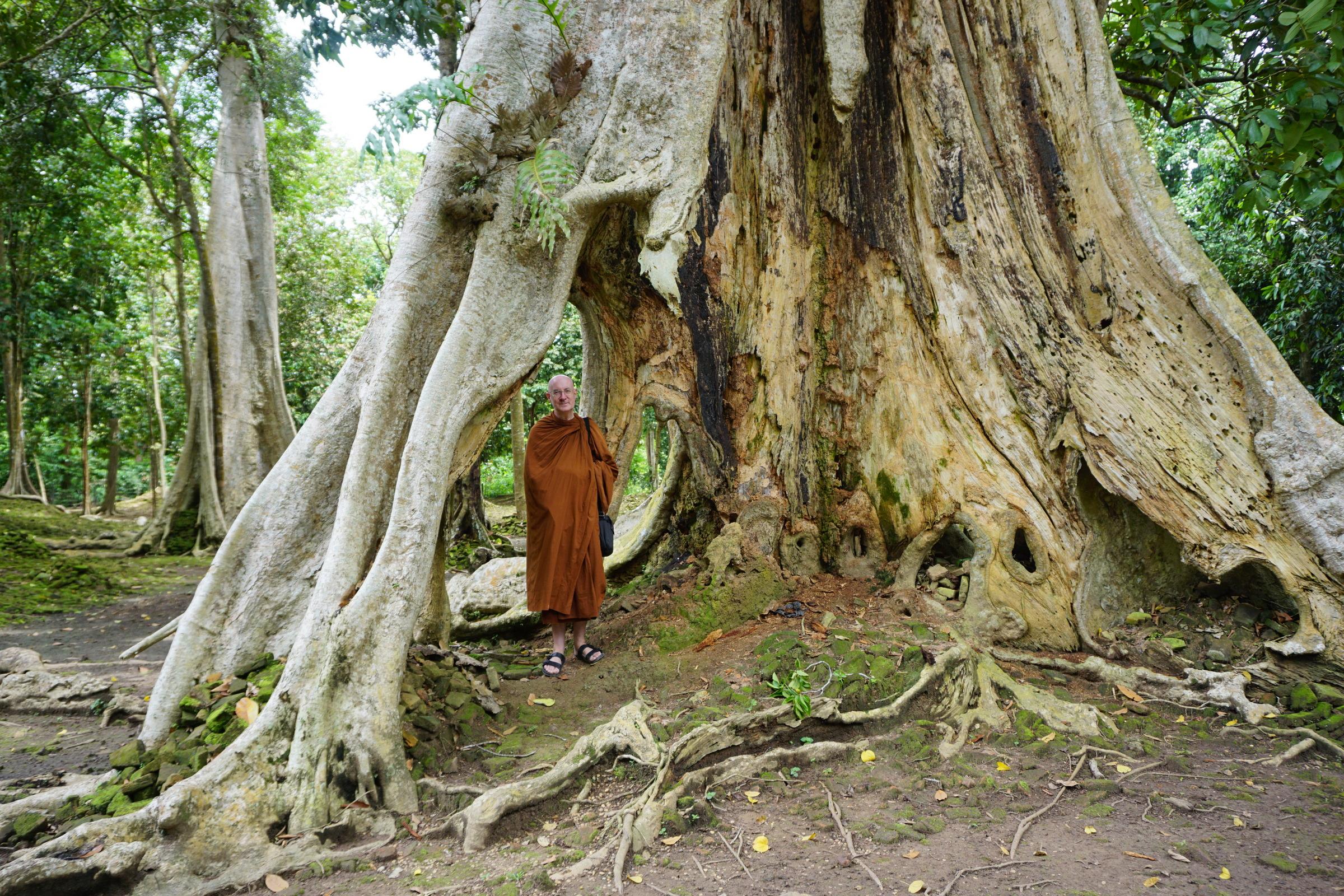Under a massive Tree at Candi Koto Mahligai